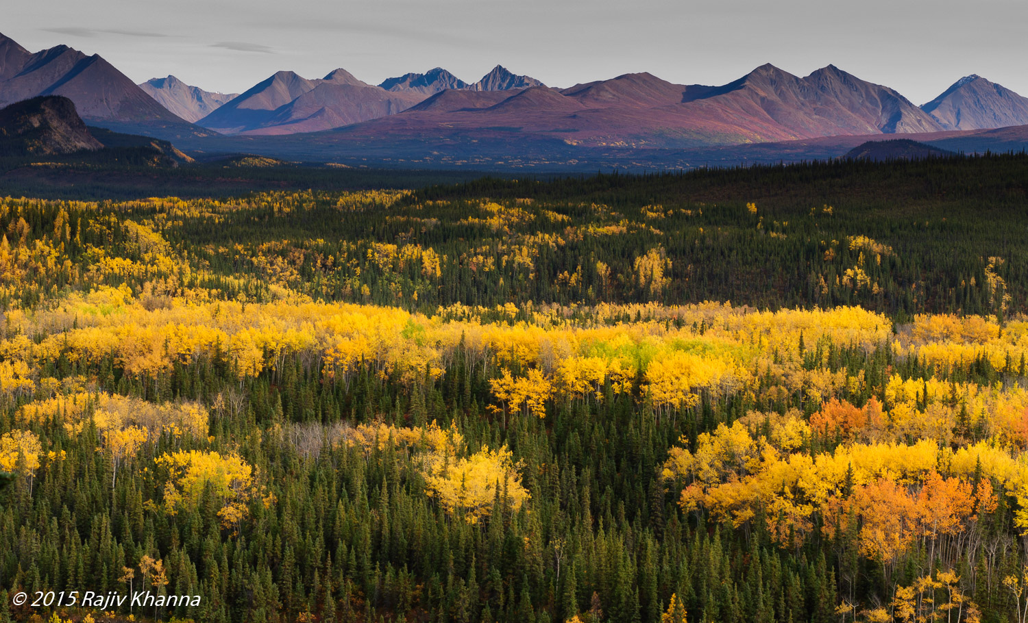 """denali national park gay singles Denali national park and preserve 335,240 likes 6,263 talking about this  """"there's a sunrise and a sunset every single day, and they're absolutely free."""